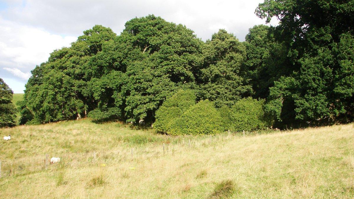 Steve's woodland