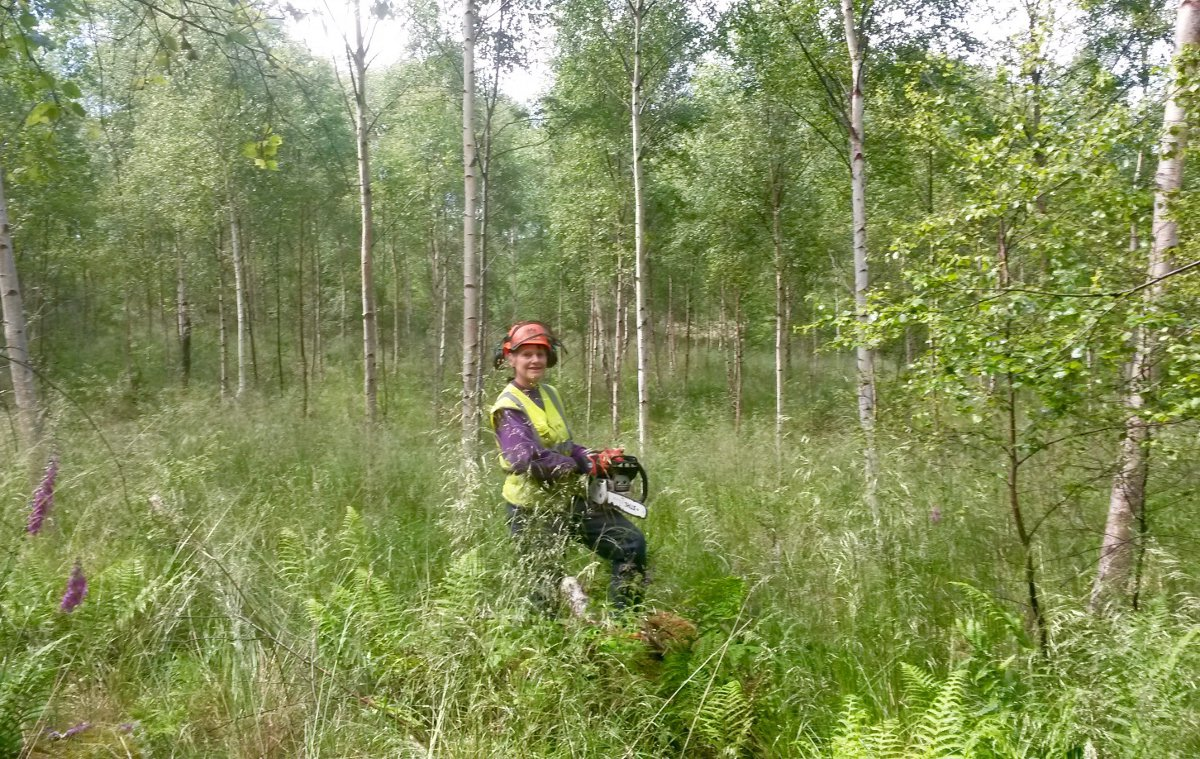 Annie thinning birch
